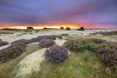 Purpurfärgad solnedgång Hoge Veluwe arkivbild