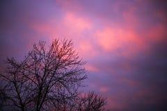 Purpurfärgad ultraviolett himmel Royaltyfri Foto
