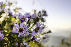 Purpurfärgad vildblomma Gray Sky Fotografering för Bildbyråer