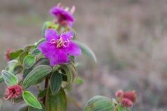 Purpurfärgad wild blomma royaltyfri fotografi