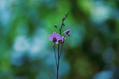 Purpurfärgade blåa blommor växer och blommar arkivfoto