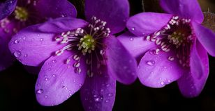 Purpurfärgade blom Arkivbild