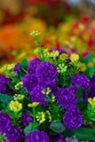 Purpurfärgade blommor royaltyfri foto