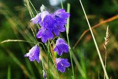 Purpurfärgade blommor Arkivbild