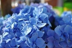 Purpurfärgade blommor i landsträdgård Arkivfoton