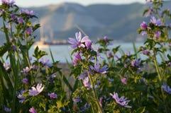 Purpurfärgade blommor på en bakgrund av havet och berg arkivfoto
