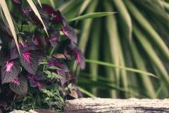 Purpurfärgade blommor växer på timmer royaltyfri fotografi