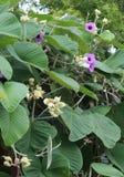 Purpurfärgade dekorativa blommor Arkivbilder
