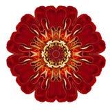 Purpurfärgade kalejdoskopiska Dahlia Flower Mandala Isolated på vit Royaltyfri Foto