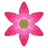 Purpurfärgade kalejdoskopiska Lily Flower Mandala Isolated på vit Arkivbilder