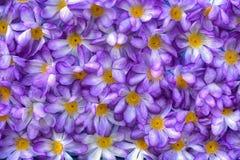 Purpurfärgade konstgjorda blommor Arkivfoton