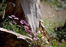 Purpurfärgade lösa blommor Arkivfoton