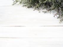 purpurfärgade limoniumblommor på vit träbakgrund arkivfoto