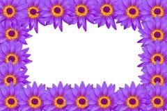 Purpurfärgade lotusblommablommor som bildas som ramen som isoleras på den vita backgroen Fotografering för Bildbyråer