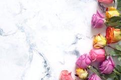 Purpurfärgade och gula rosor på vit bakgrund Royaltyfri Fotografi