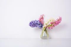 Purpurfärgade och rosa hyacintblommor Arkivfoton