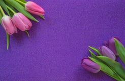 Purpurfärgade och rosa tulpan på lilor blänker bakgrund med kopieringsutrymme royaltyfri fotografi