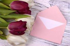Purpurfärgade och vita tulpan med det rosa kuvertet på en vit träbakgrund Kvinnas dag 8 mars Fotografering för Bildbyråer