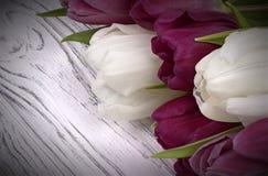 Purpurfärgade och vita tulpan med vitbok på en vit träbakgrund Utrymme för text Kvinnas dag 8 mars Arkivfoton