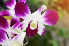 Purpurfärgade orkidér i den naturliga trädgården arkivbilder