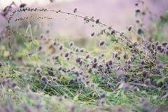 Purpurfärgade små blommor Arkivbild