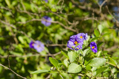Purpurfärgade tropiska blommor Arkivbilder