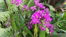 Purpurfärgade tropiska blommor Arkivfoton