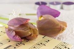 Purpurfärgade tulpan på ett musikark Arkivbild