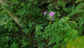 Purpurfärgade vildblommar Royaltyfria Bilder