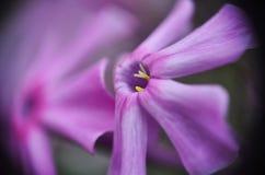 Purpurfärgade vildblommar Blommor i fältet Makro Arkivbild