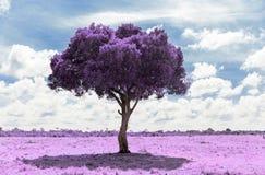 Purpurfärgat akaciaträd i savann med infraröd effekt arkivfoton