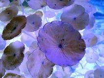 Purpurfärgat blad och härlig sten Fotografering för Bildbyråer