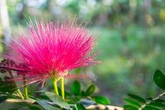 Purpurfärgat blommasken Arkivfoto