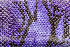 Purpurfärgat pytonormläder, hudtextur för bakgrund Arkivbild