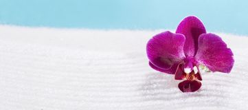 Purpurf?rgad orchid royaltyfria bilder