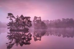 Purpurfärgad dimmig soluppgång över den lösa sjön i skog Royaltyfri Bild