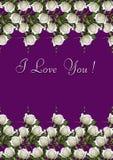 Purpurfärgat hälsningkort med gränsen av vita rosor Royaltyfria Foton