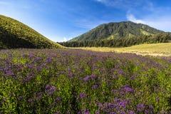 Purpurowa łąka z górą i niebieskim niebem jako tło zdjęcia royalty free