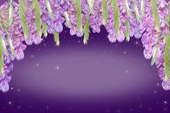 Purpurowa akacja royalty ilustracja
