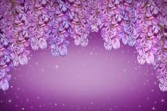 Purpurowa akacja zdjęcia stock