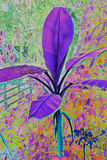 Purpurowa Bananowego drzewa sztuka Obrazy Royalty Free