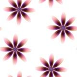 Purpurowa brąz menchia kwitnie, bezszwowy okresowy kwiecisty wzór, kwiaty, przejrzysty tło Zdjęcia Royalty Free