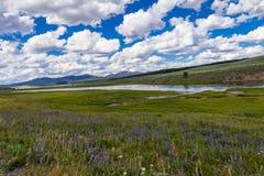 Purpurowa Dzikiego kwiatu łąka obraz royalty free