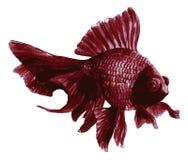 Purpurowa goldfish akwarela Obraz Stock