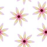 Purpurowa kolor żółty menchia kwitnie, bezszwowy okresowy kwiecisty wzór, kwiaty, przejrzysty tło Zdjęcia Stock