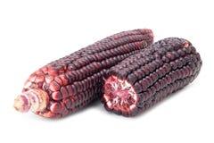 Purpurowa kukurudza Obrazy Royalty Free