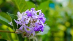 Purpurowa kwiatu tła zieleń rozmyta Zdjęcia Stock