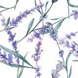 Purpurowa lawenda Kwiecisty botaniczny kwiat Akwareli tła ilustracji set Bezszwowy tło wzór royalty ilustracja