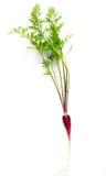 Purpurowa lub czerwona dziecko marchewka na bielu Zdjęcie Royalty Free