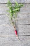 Purpurowa lub czerwona dziecko marchewka na nieociosanym drewnianym tle Obrazy Royalty Free